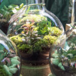 Green rooms terrarium
